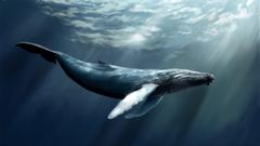 humpback whale desktop wallpapers