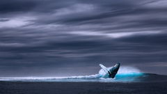 Blue humpback whale on body of water under gray skies HD