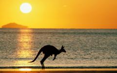 joey the kangaroo wallpapers