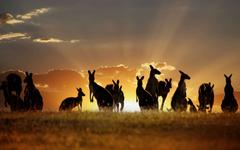 Amazing Wildlife Animal Wallpapers