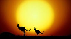 Kangaroo silhouettes Wallpapers