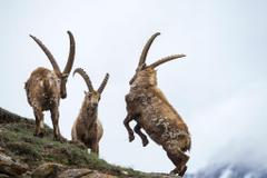 Bizarre Horns of the Animal Kingdom