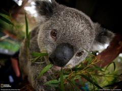 Khalilahmadkhan on Koala HD Wallpapers and