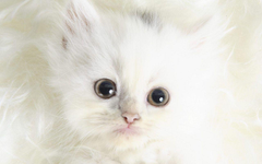 Cute Kittens Gif Backgrounds Wallpapers