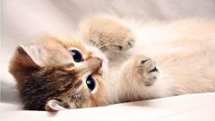 Wallpapers For Kitten White Backgrounds Wallpapers