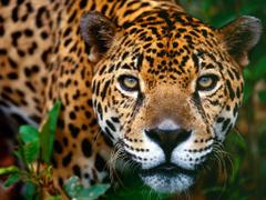 Wallpaper Collection Jaguar Wallpapers