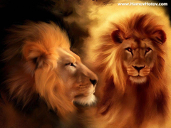 Wallpapers For Roaring Male Lion Wallpapers