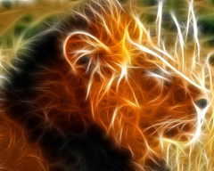 waspwednesday Lion Wallpapers