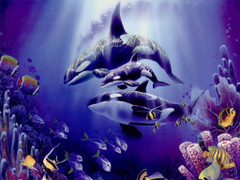 Beautifull Purple Orca Wallpapers High Resoluti Wallpapers
