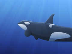 Wallpapers Collections orca