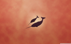 Narwhal Wallpapers