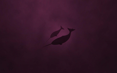 Linux Natty Narwhal Android wallpapers for