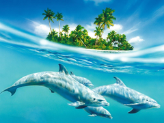 Icy blue glaze of dolphins