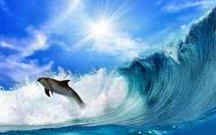 Dolphins HD Wallpapers