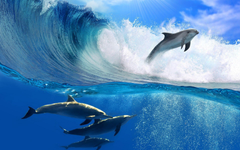 Dolphin Wave Wallpapers HD Wallpapers Top