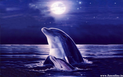 Moving Dolphin Wallpapers