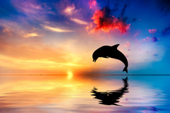 Blonde haired girl kissing dolphin on body of water HD