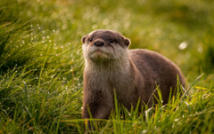 Otters Full HD Wallpapers and Backgrounds