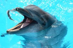 dolphinarium dolphins fish fish in water mammals marine