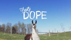 Llama Wallpapers 5