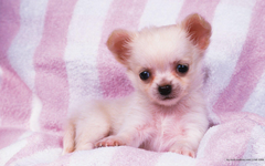 units of Puppy Wallpapers