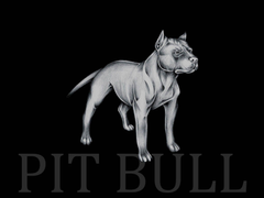 Pit bull wallpapers wallpapers