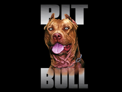 pit bull dog breed wallpapers