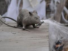 Rats Wallpapers