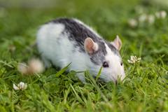 grass amazing desktop image pet 4k animal image clover