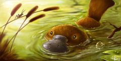 Platypus HD Wallpapers