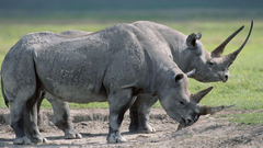 Wallpapers 1920x1080 Rhinos Steam Large grass Food