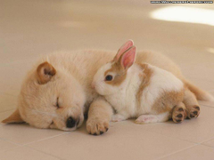 Sleeping Puppy and Cute Rabbit