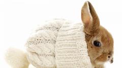 Xmas Stuff For Christmas Rabbit Wallpapers