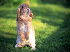 Lovely Rabbit Wallpapers