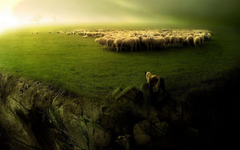 Sheep Wallpapers for Walls Outstanding 20 Fantastic Hd Animal Herd