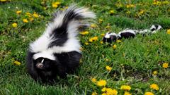 Skunk Babies Hd Wallpapers