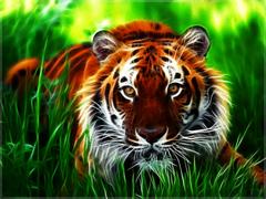 D Tiger HD Wallpapers