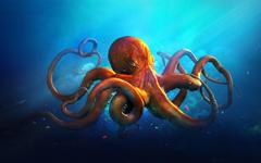 HD Octopus Wallpapers