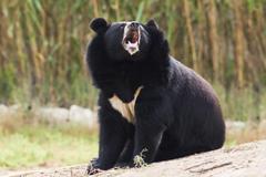 Best 42 Asian Black Bear Wallpapers on HipWallpapers