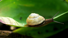 Snail Wallpapers Snail Live Image HD Wallpapers SHXimaI Graphics