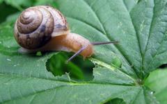 Snail Computer Wallpapers Desktop Backgrounds