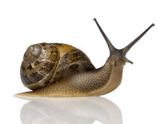 Best 38 Snail Backgrounds on HipWallpapers