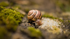 Excellent HD Snail Wallpapers