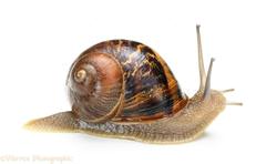 Snail Clip Art Clip Art on Clipart