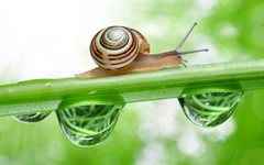 Ways to Get Rid of Snails Slugs from Your Garden Jinn