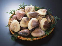 Clams Wallpapers and Backgrounds Image