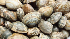 Clams wallpapers