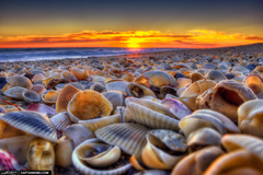 Sea of clams HD wallpapers