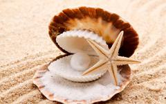 seashells starfish pearl sand beaches shell clam