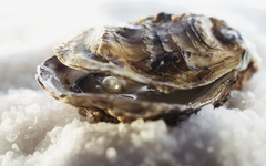 wallpapers 1440x900 clams pearl ice seafood